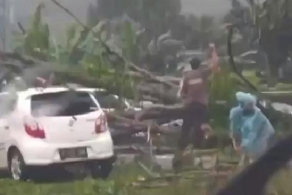 Pohon Tumbang di Exit Tol Bawen Timpa Mobil