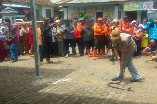 Warga Wonosobo Ramai-Ramai Berburu Ular Kobra di Permukiman