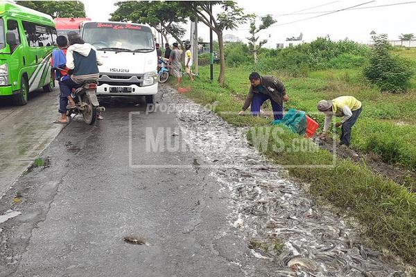 Truk Kecelakaan di Pantura Pati-Juwana, 1,3 Ton Lele Tumpah ke Jalan