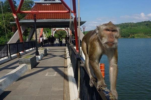 Gadis Indigo Disambut Monyet Sunan Kalijaga di Gua Kreo