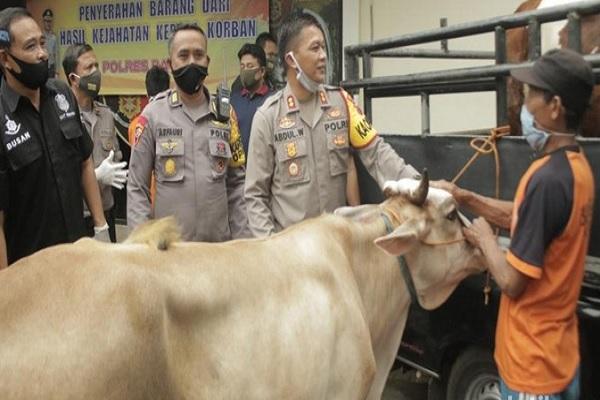 Empat Pencuri Sapi di Batang Ditangkap Polisi Gara-Gara Truk Selip di Hutan