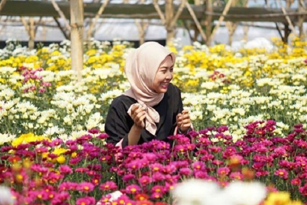 Begini Cara Foto Bak Princess di Setiya Aji Flower Farm