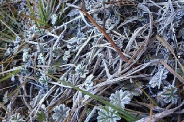 Semak-Semak Gunung Lawu Beku Diselimuti Es