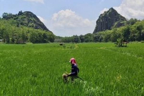 Ada Legenda Bandung Bondowoso di Gunung Sepikul Sukoharjo…