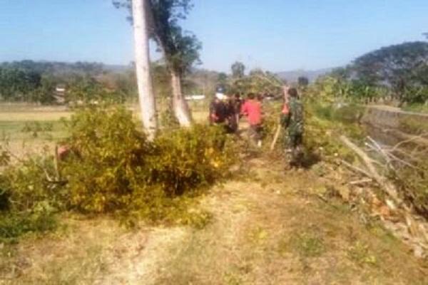 Pohon di Tanggul Sungai Sukoharjo Ditebang, Ular Bermunculan…