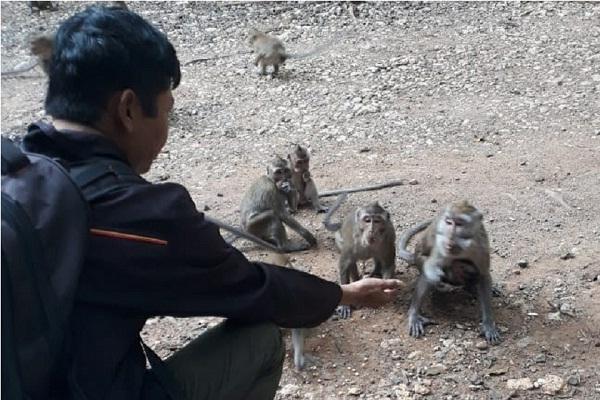 Kemarau Tiba, Kawanan Monyet Turun Jalan di Todanan Blora