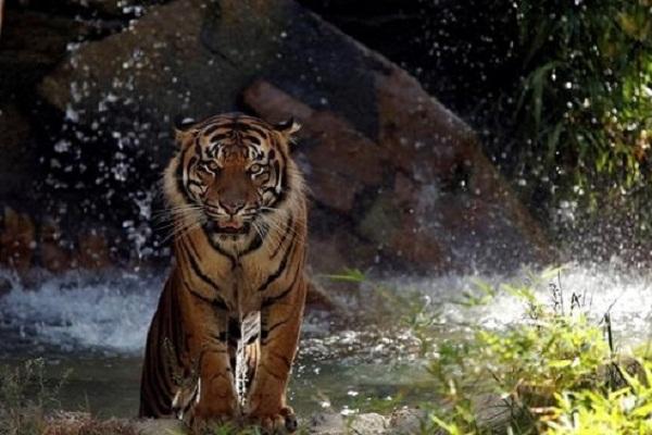 Hutan Jateng Bukan Hanya Simpan Harimau Jawa