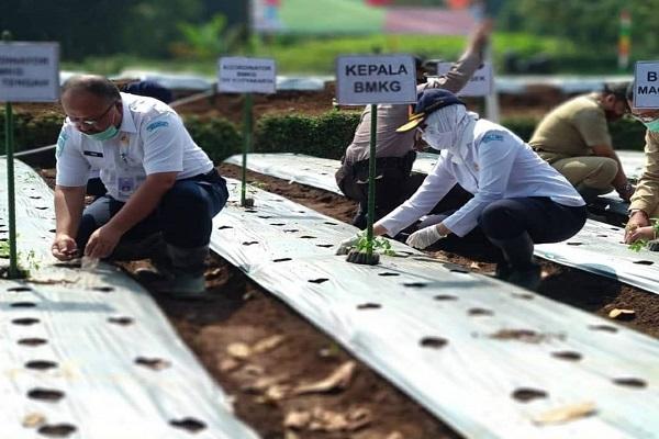 Hindari Puso, BMKG Minta Petani Siasati Perubahan Iklim