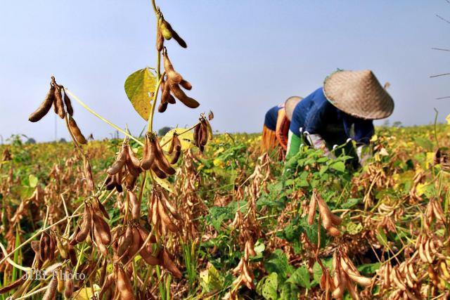 Jateng Kucurkan Rp10 M untuk Pertanian