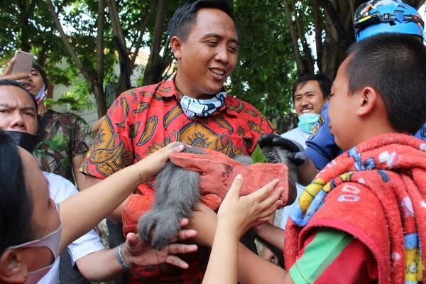 Lepas ke Permukiman Warga Semarang, Ipan Si Owa Jawa Ditembak Bius