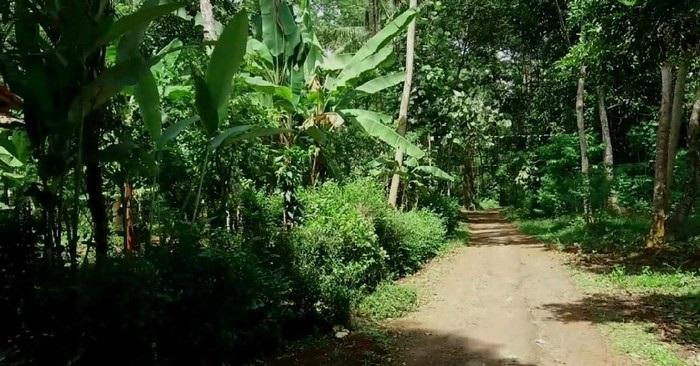 Aneh! Cuma Ada 7 Rumah di Dusun Sibimo Batang, Kala Lebih Ini yang Bakal Terjadi…