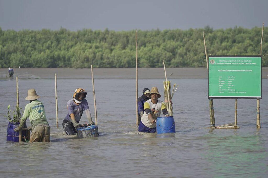 Dukung Pemulihan Ekonomi, BPDASHL Solo Tanam 330.000 Mangrove di Gresik