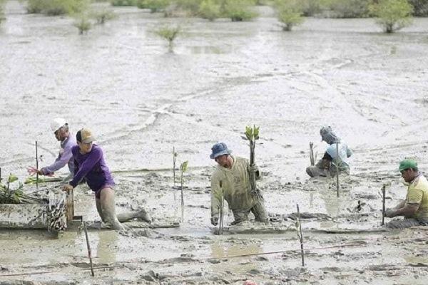 Penanaman Mangrove, Bantu Ekonomi Warga Randuboto