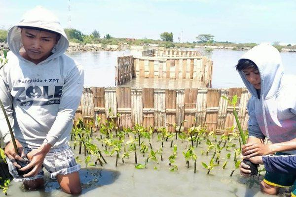 Penanaman Mangrove BPDASHL Solo Dukung Pengembalian Ekosistem Laut