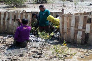 Pelaksanaan program Padat Karya Penanaman Mangrove yang dilakukan BPDASHL Solo (istimewa)