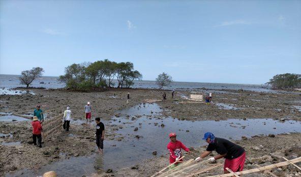 Penanaman Mangrove BPDASHL Solo Mengakomodasi Kearifan Lokal Masyarakat Pesisir