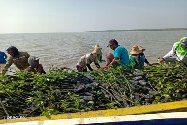 Penanaman Mangrove BPDASHL Solo Dukung Pemulihan Ekonomi Desa