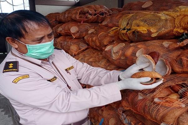 Sepanjang 2020, Jateng Ekspor 330 Ton Kopra