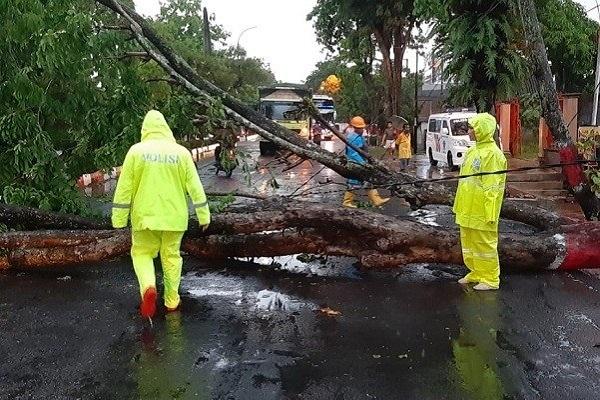 Tragis! Perempuan Paruh Baya di Grobogan Meninggal Dunia Tertimpa Pohon Tumbang