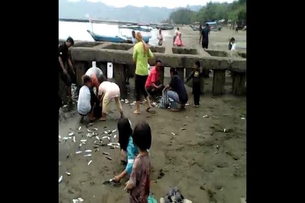 Ribuan Ikan Terdampar di Pantai Teluk Penyu Cilacap, Ini Analisis BMKG