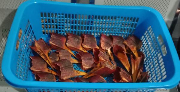 Balai Karantina Semarang Gagalkan Penyelundupan Paruh Burung Rangkong
