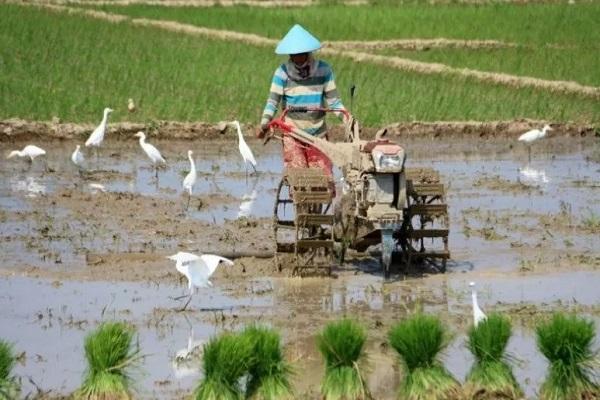 267 Hektare Sawah di Pekalongan Terdampak Banjir