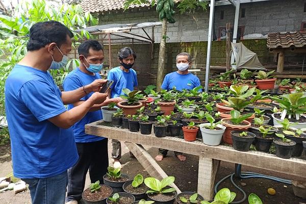 Pandemi Ubah Warga Kampung di Salatiga Jadi Pelaku Bisnis Tanaman Hias