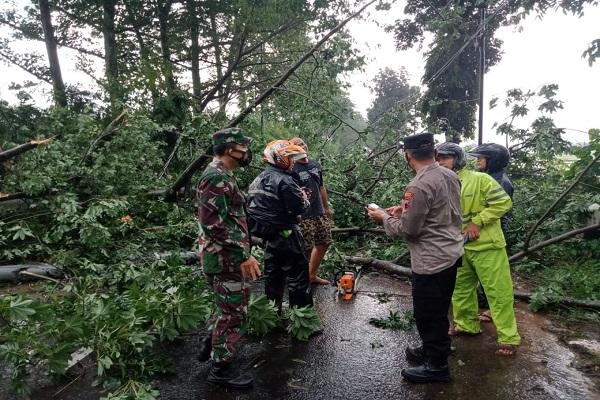 Pohon Tumbang Timpa Minibus di Pemalang, 4 Orang Meninggal Dunia