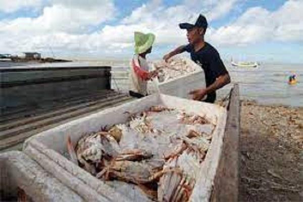 Jateng Ekspor 584 Ton Produk Perikanan, Rajungan Paling Diminati