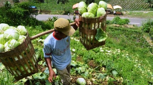 Wow! Ekspor Pertanian Jateng Tertinggi Nasional