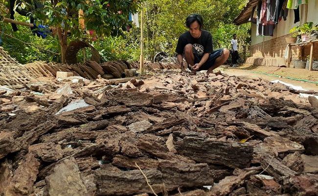 Media Tanam Kulit Pinus Gunung Wilis Diekspor Sampai Filipina